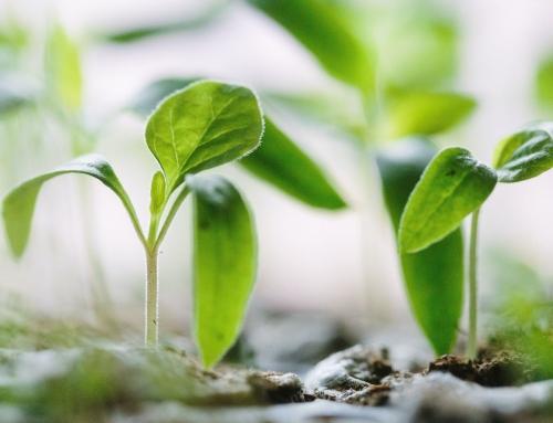 Ogród niczym orient – tak to możliwe! Oto naszych 5 rad